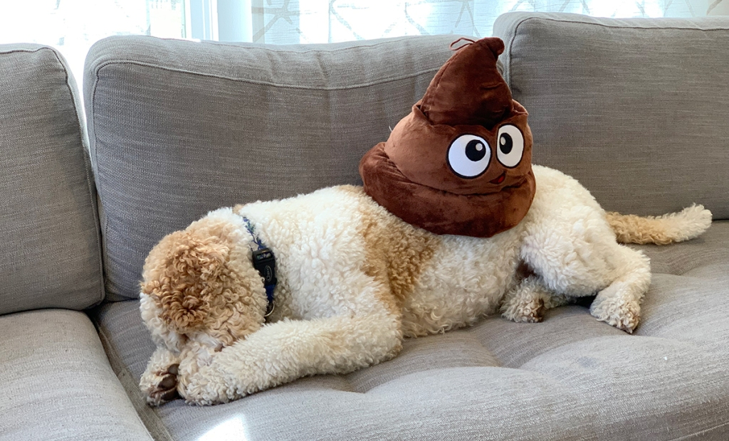 collin's dog with plush poop emoji hat on back